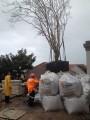 Mature Tree Installation